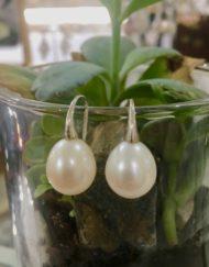 Freshwater Pearl Silver swan earrings